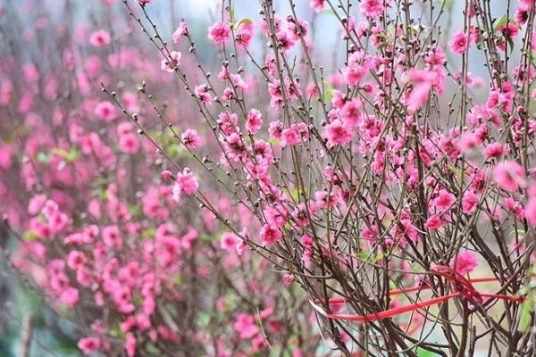 Tư vấn chọn cây cảnh làm quà tặng ngày xuân